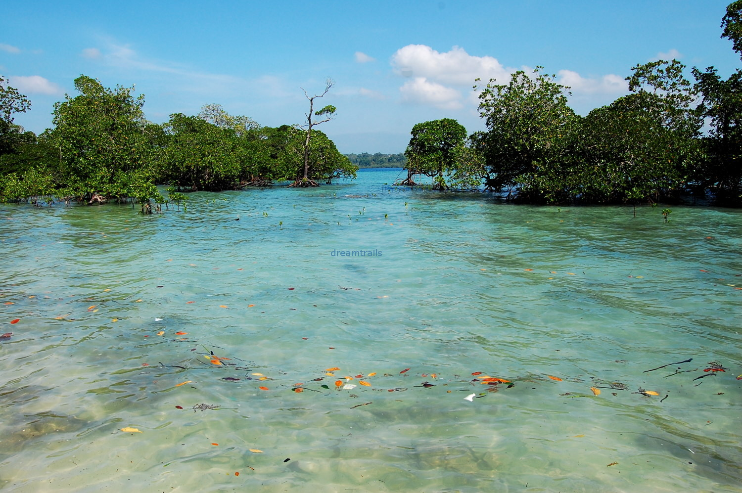 Clear Water at Havelock, Andaman & Nicobar Islands