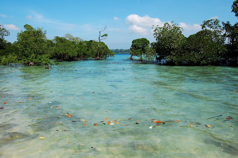 Clear Water at Havelock, Andaman & Nicobar Islands