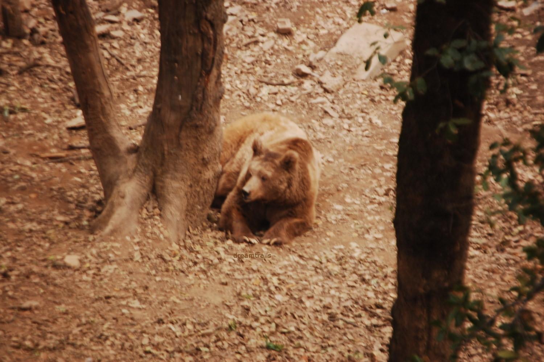 Himalayan Nature Park, Kufri