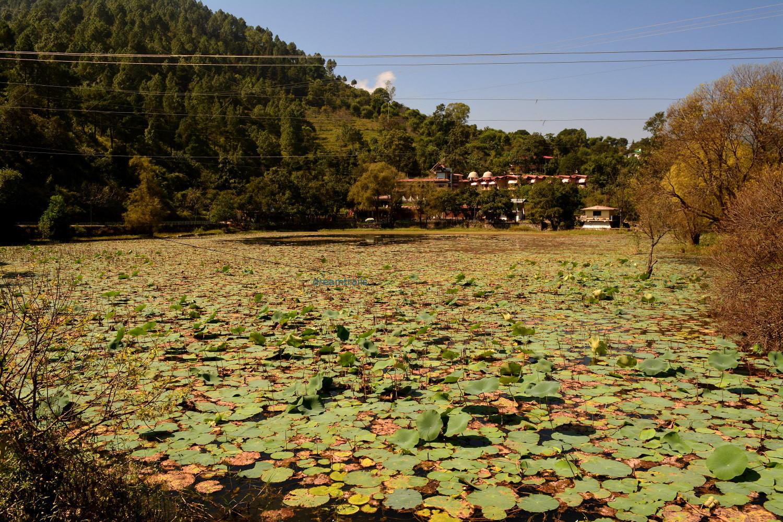 Kamaltal, near Nainital, Uttarakhand
