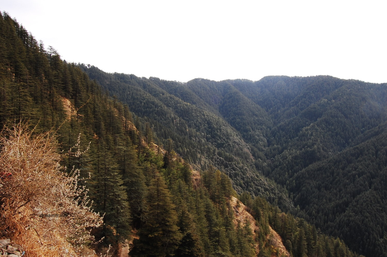 Green Valley, between Kufri and Shimla