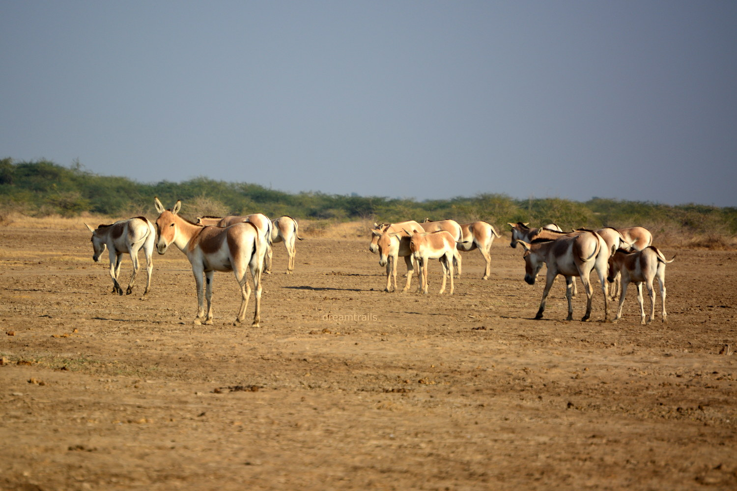 Wild Ass Sanctuary: Little Rann of Kutch