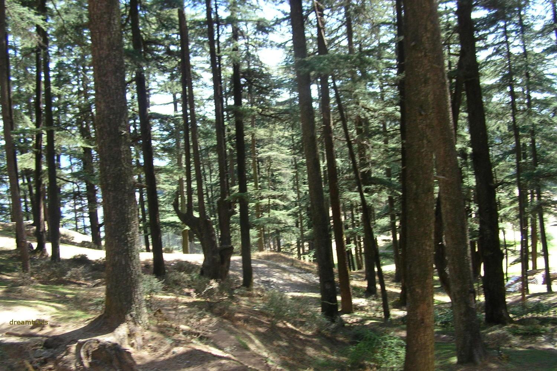 View from Naldehra, Shimla